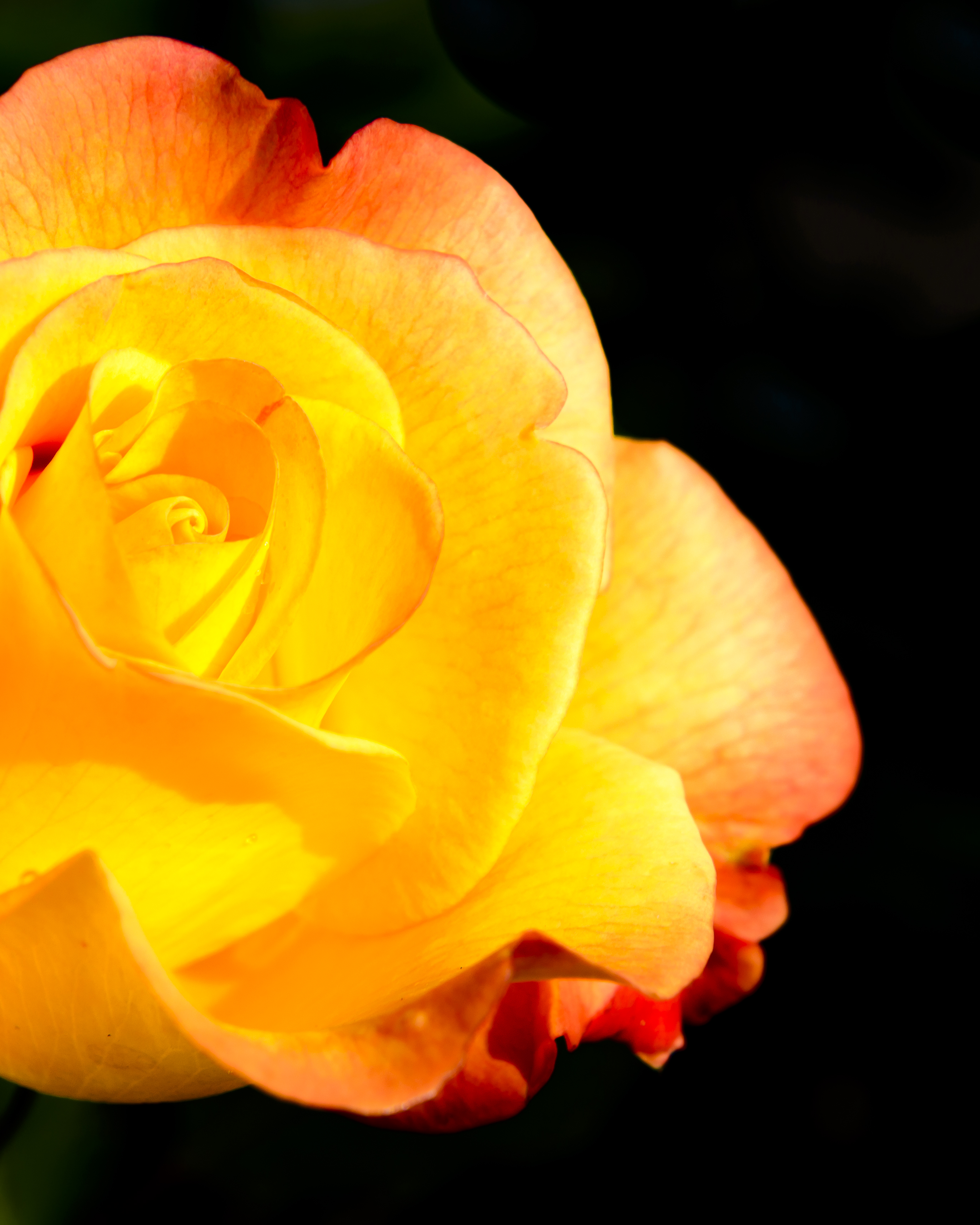 2014its not exactly the yellow rose of texas in focus daily mightylinksfo