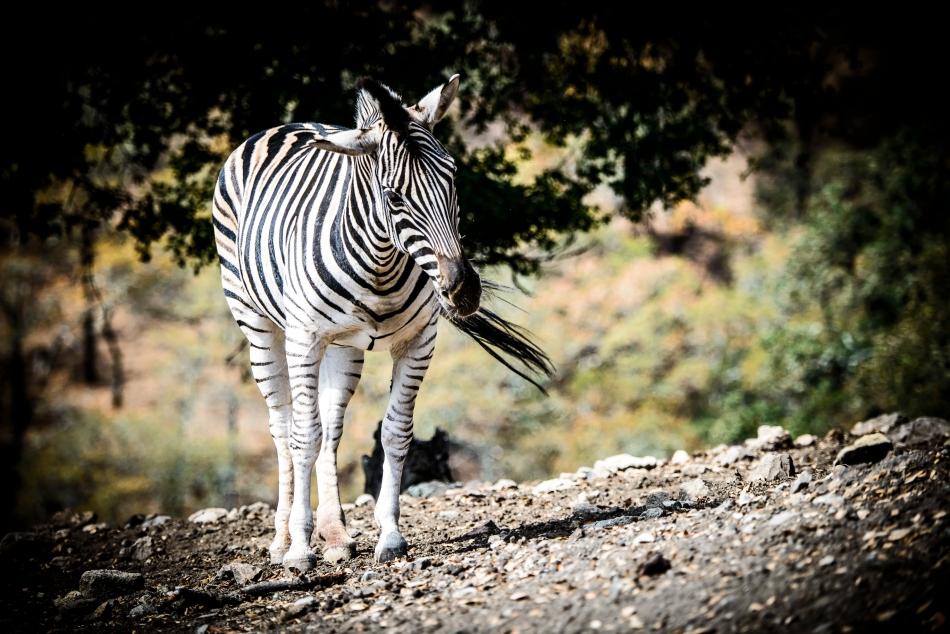 Safari West-277