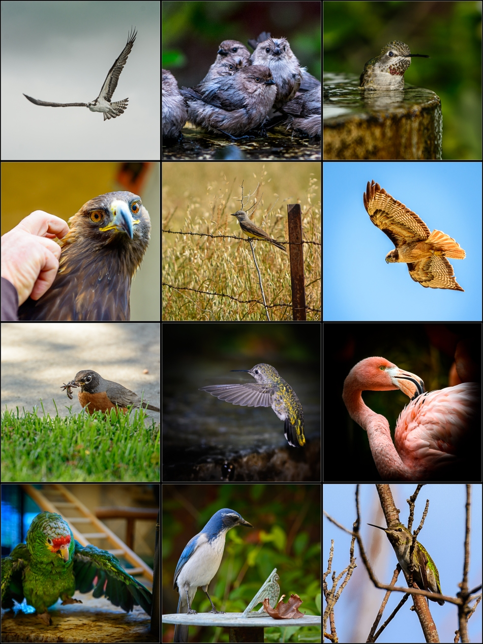 Birds of the Month 2014-2