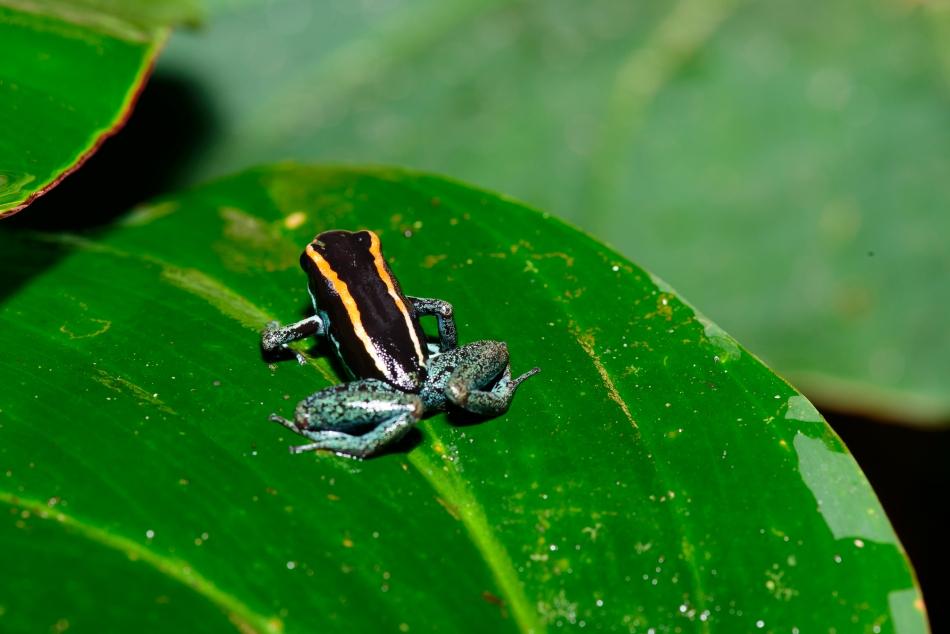 Costa Rica 2015-021-138