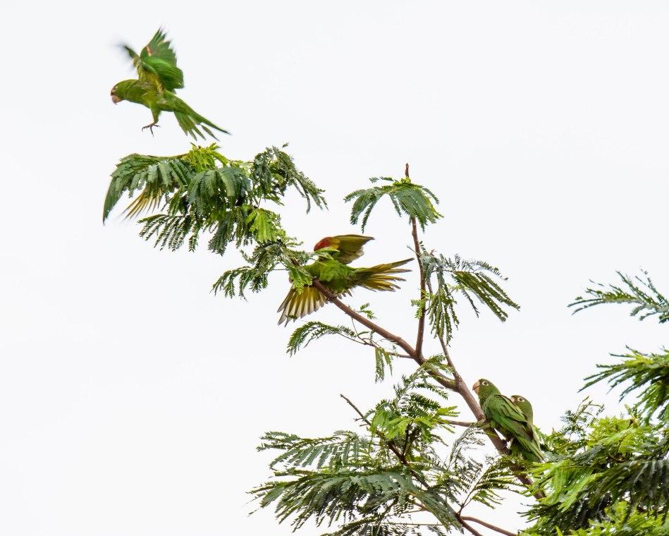 Costa Rica Day 1-127-2