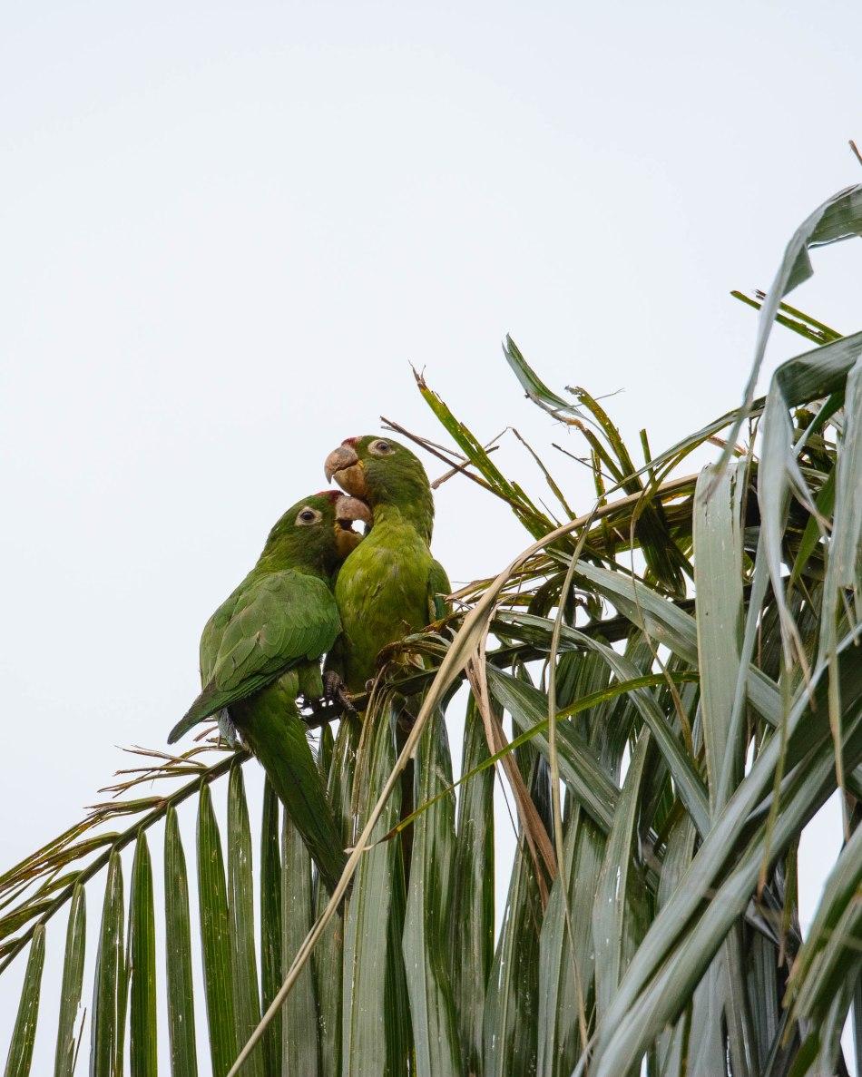 Costa Rica Day 1-313