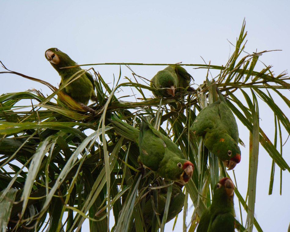 Costa Rica Day 1-318