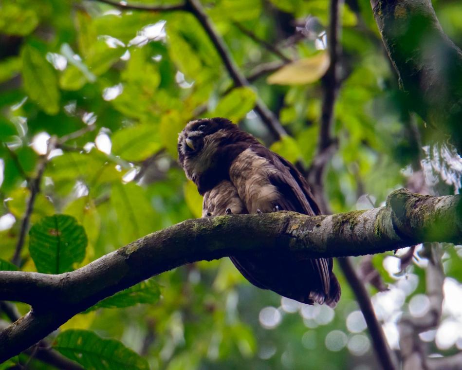 Costa Rica 2015-021-98