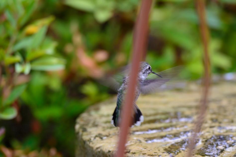 Backyard birds-5838