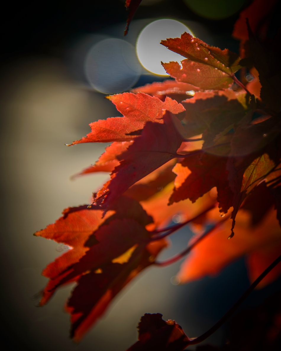 autumn leaves-0329