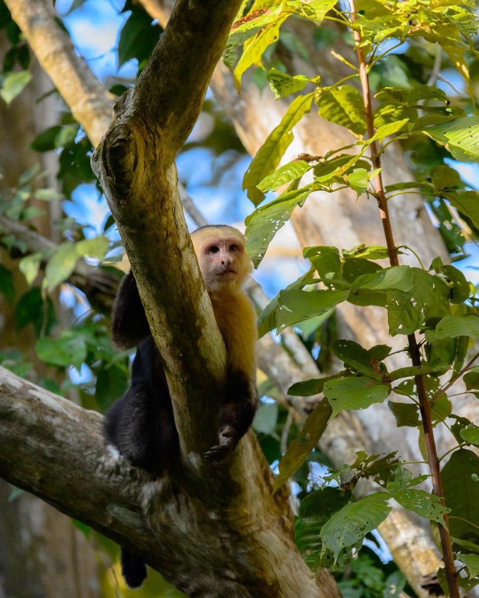 Costa Rica Day 1-9842