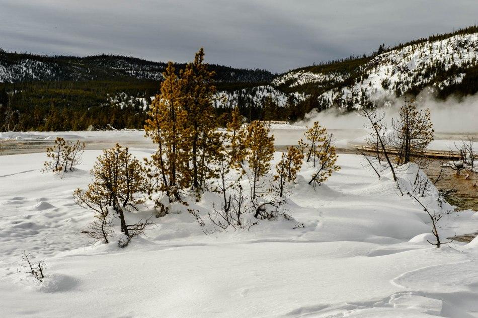 Yellowstone Day 3-7062
