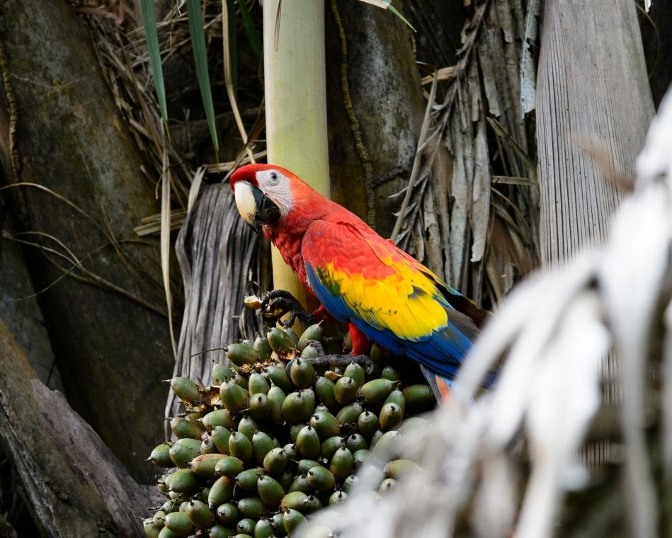 Costa Rica Day 1-0283