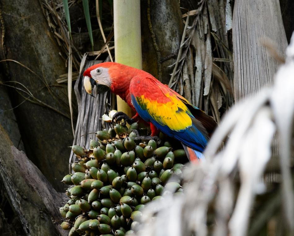 Costa Rica Day 1-0296
