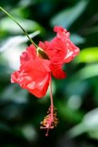 Costa Rica Day 1-9653
