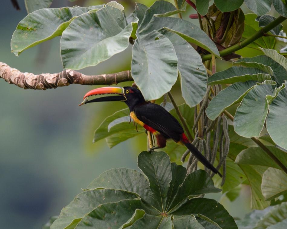 Costa Rica Day 5-3327