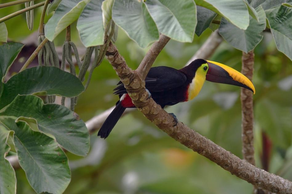 Costa Rica Day 5-3502