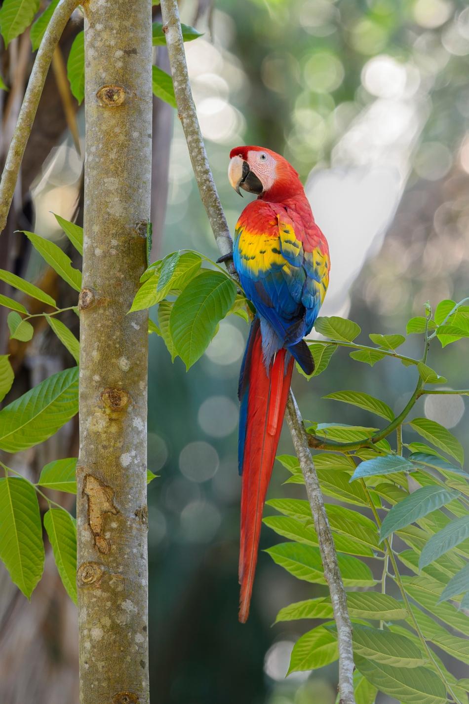 Costa Rica Day 5-4272.jpg