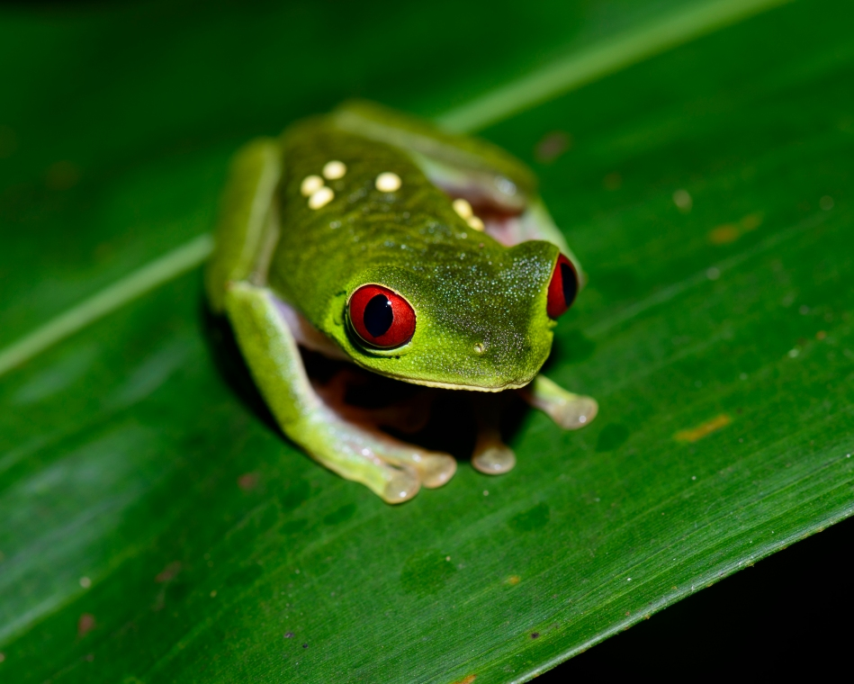 Costa Rica Day 6-0143