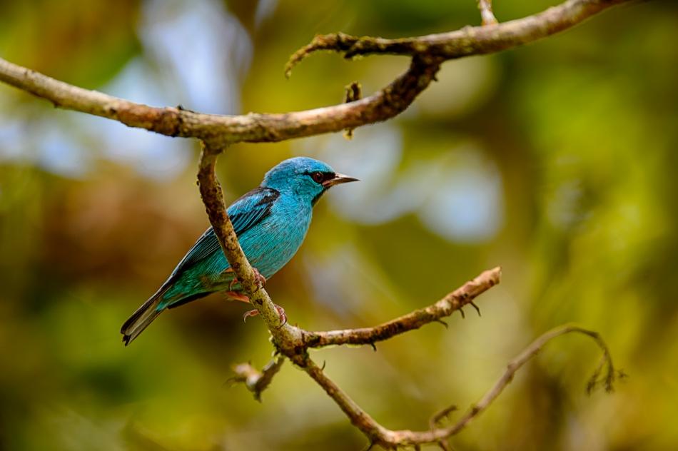 Costa Rica Day 2-0636.jpg