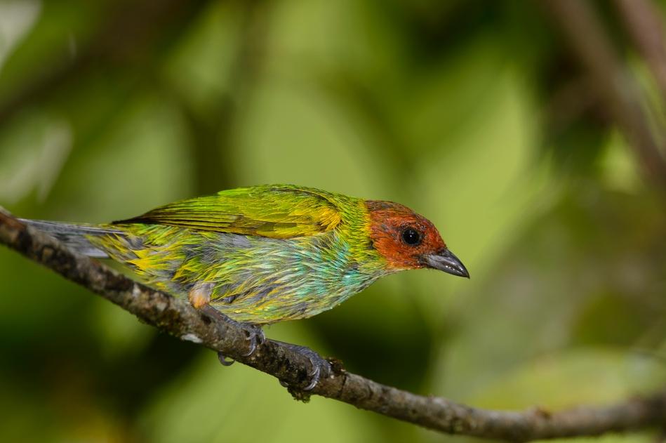 Costa Rica Day 2-0671