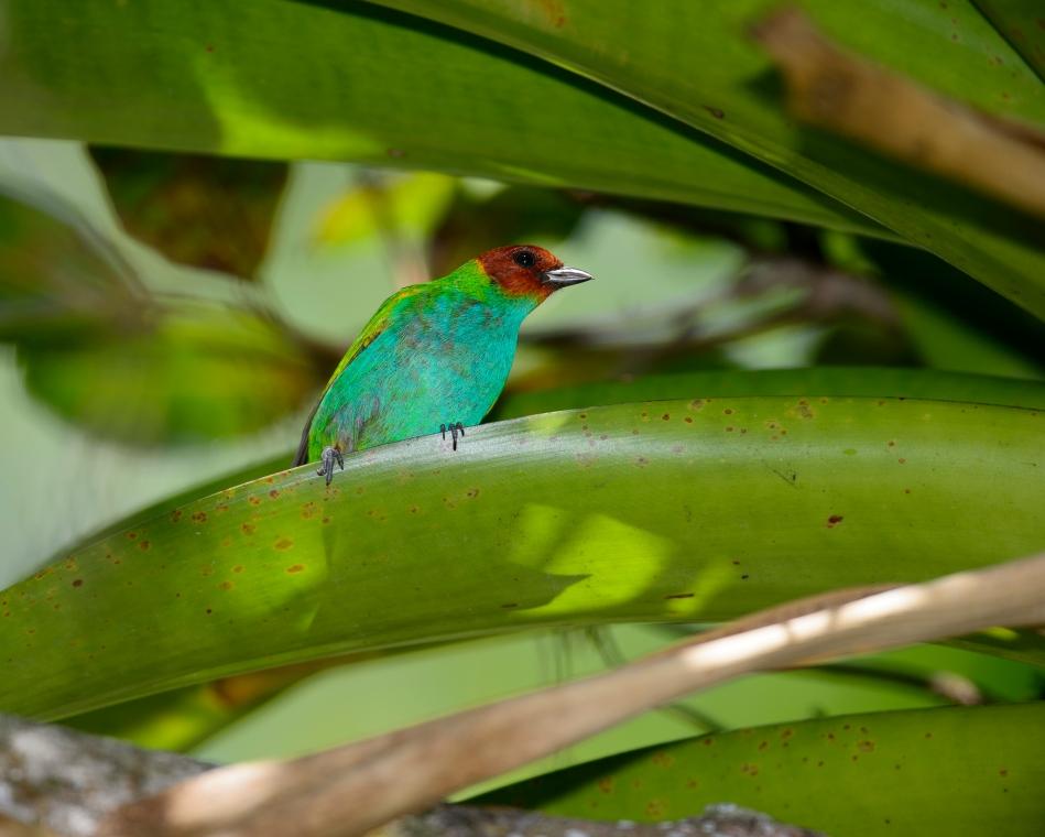 Costa Rica Day 2-0698.jpg