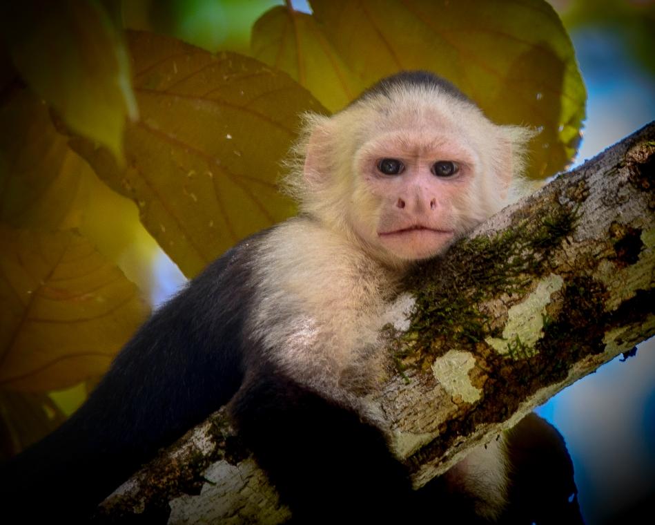 Costa Rica Day 2-8895.jpg