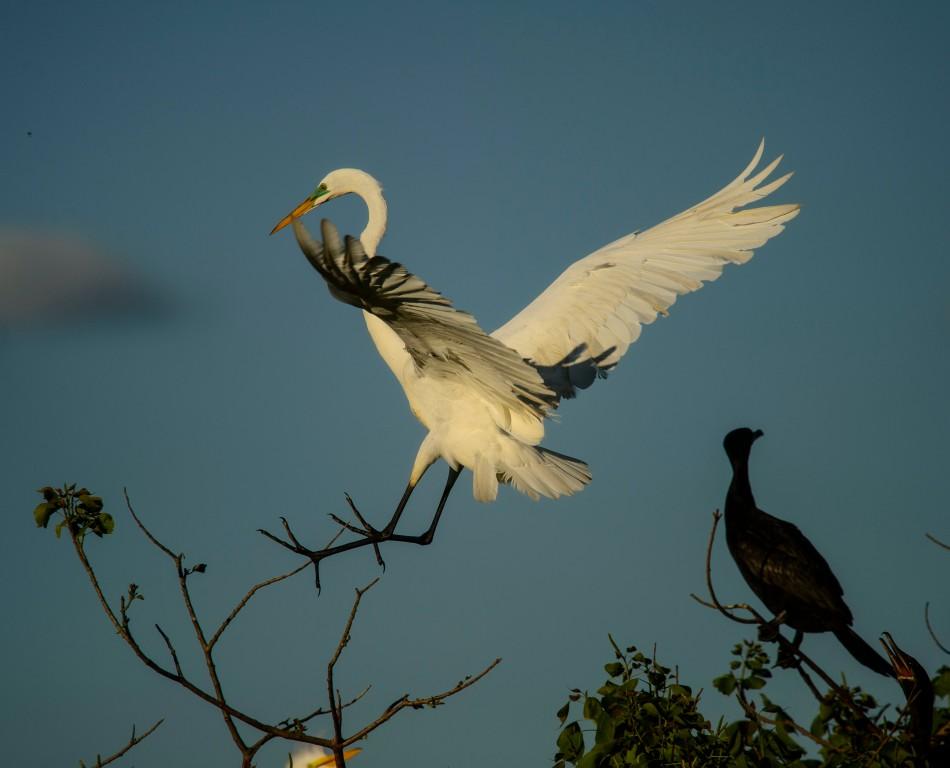 Egret Landing 1