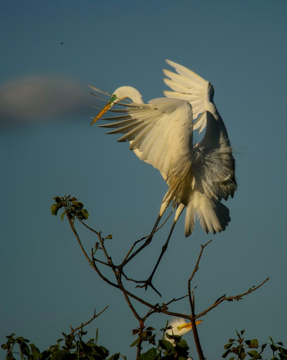 Egret Landing 2