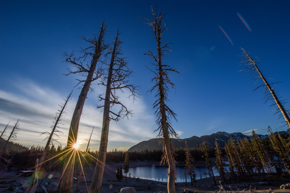 Dead Trees at Horseshoe Lake.jpg