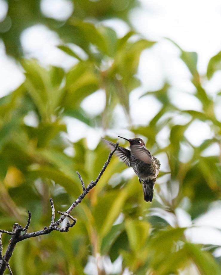 flying hummer 5.jpg