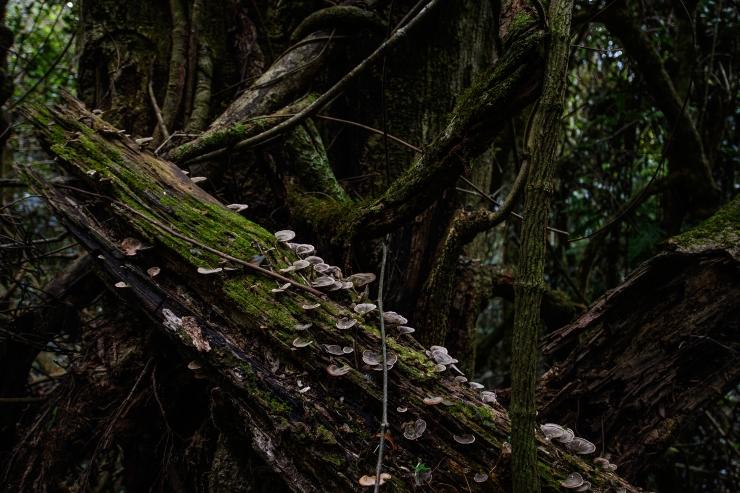 Rainforest 8