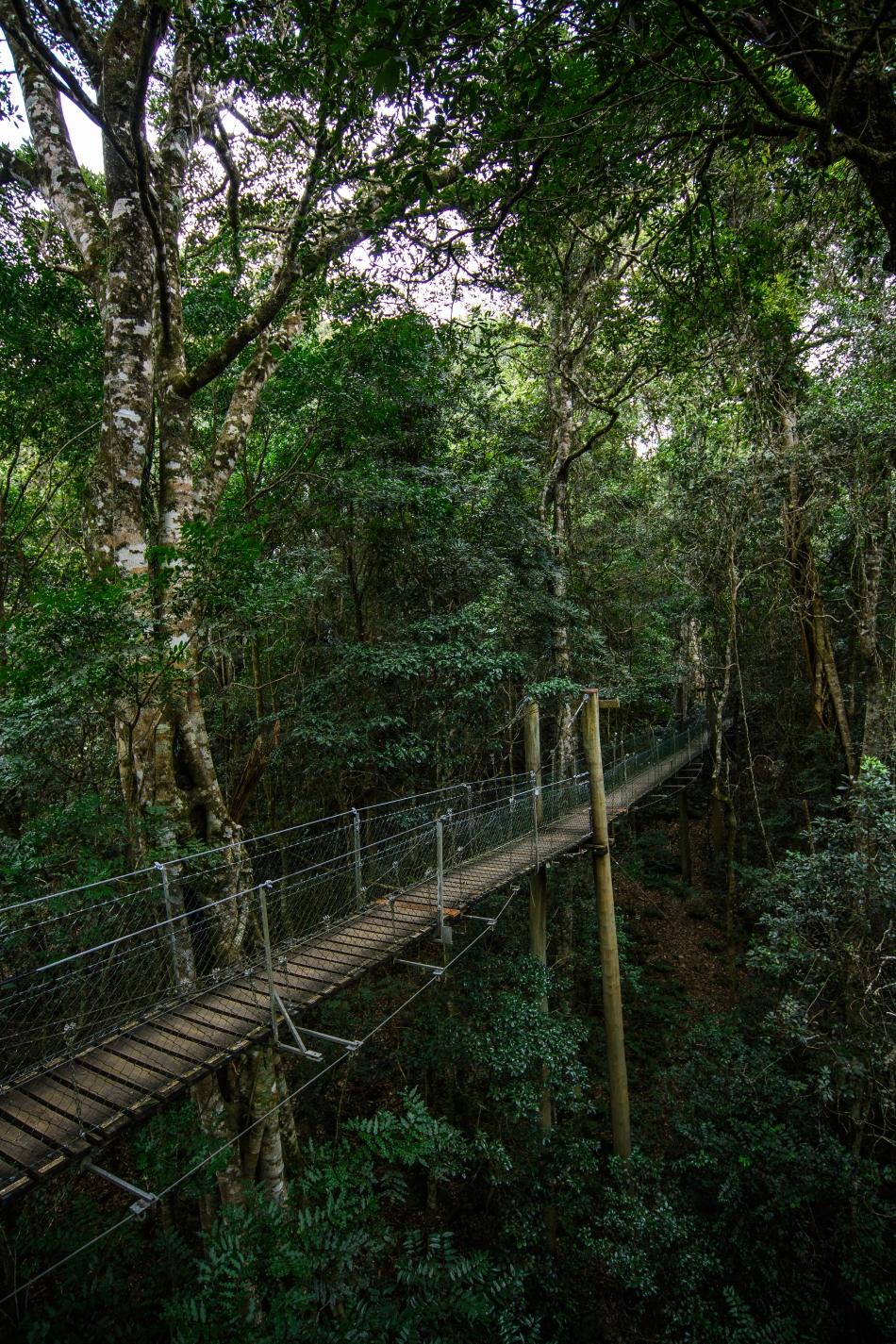 Rainforest tree walk