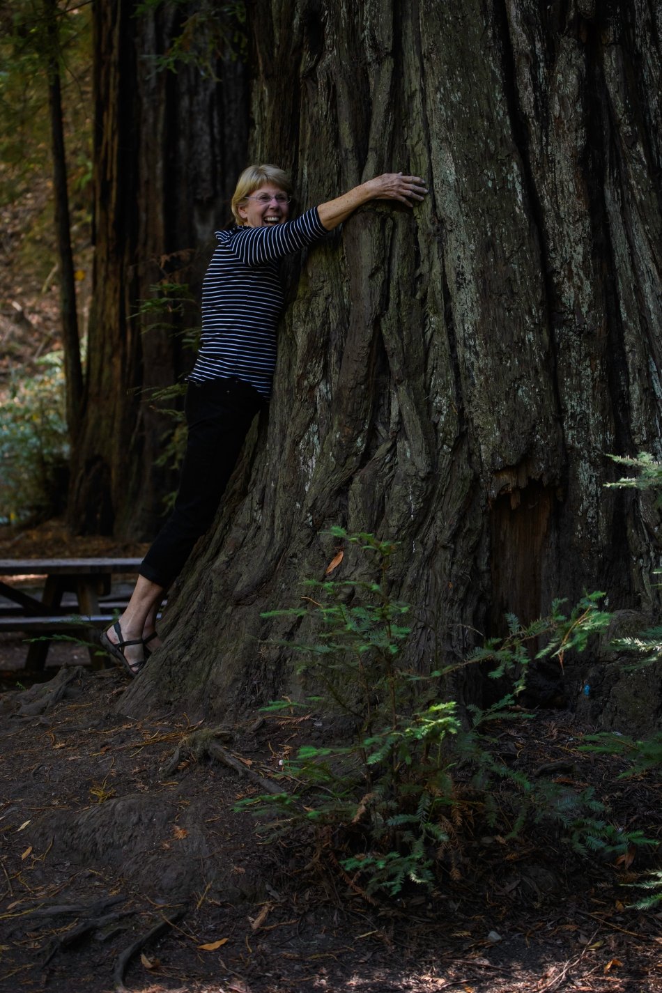 Susan the tree hugger.jpg