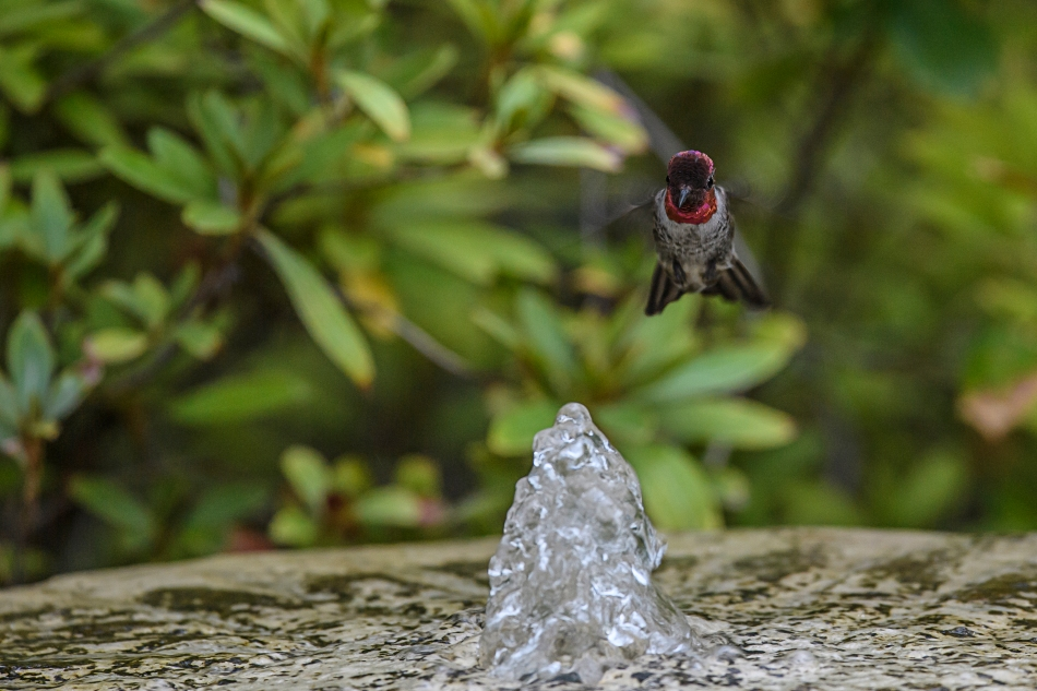 flying-hummer-fountain-4