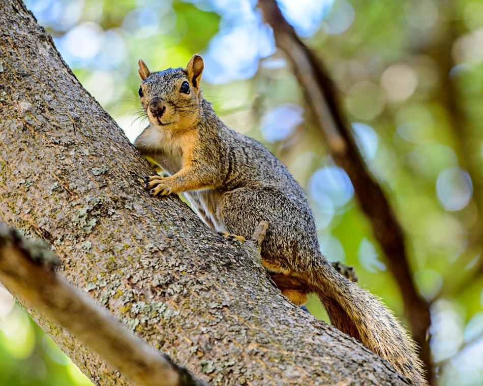 Squirret.jpg