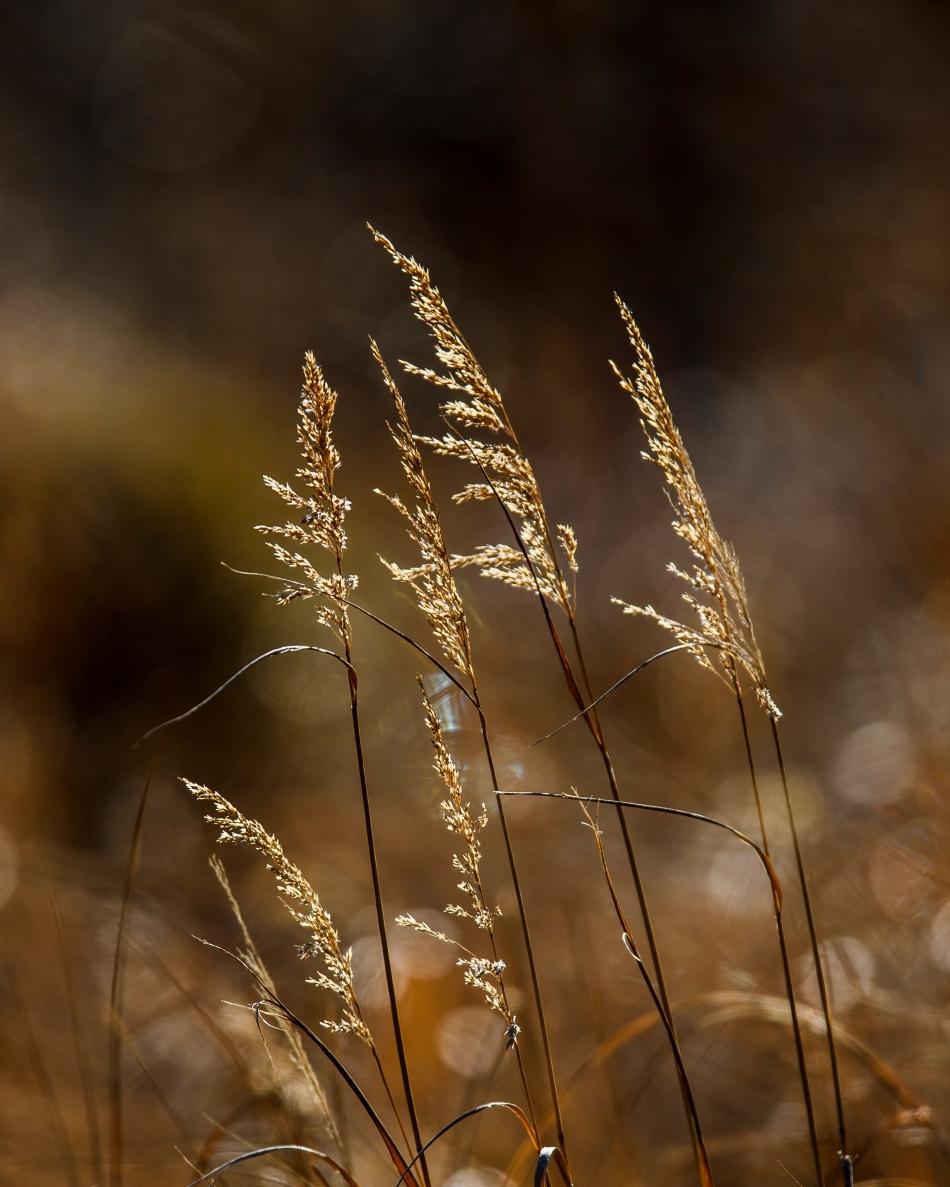 Alaskan Grasses.jpg