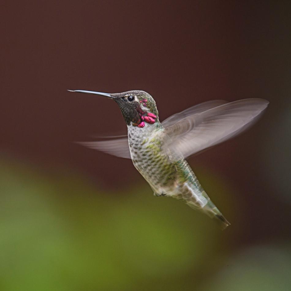 ghost wing hummer.jpg