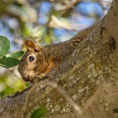 squirrel-4