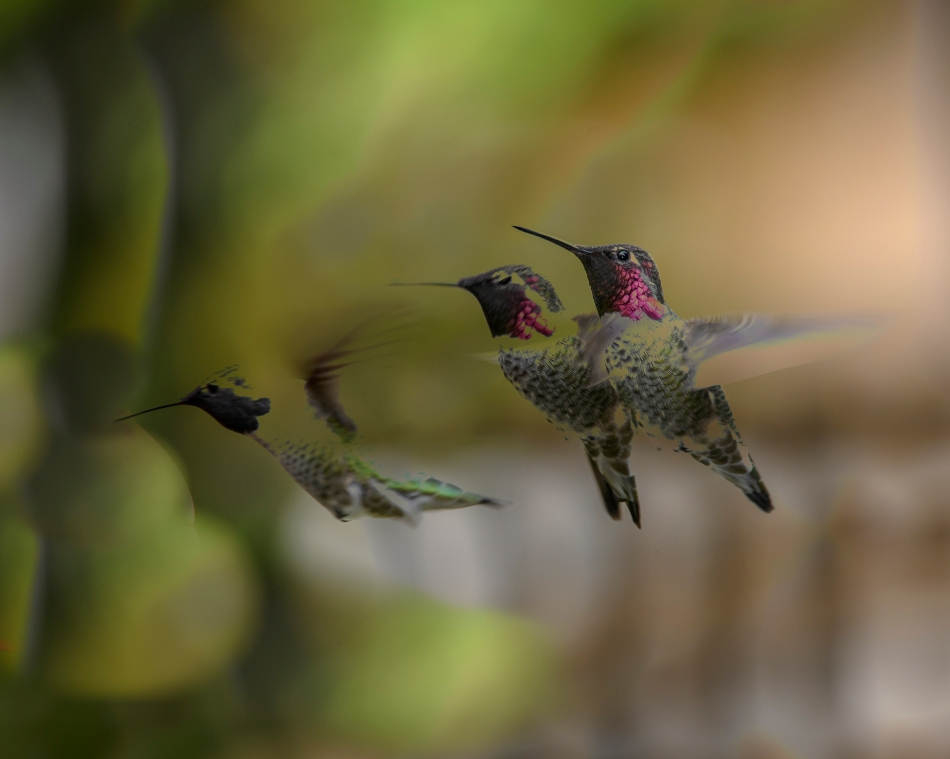 triple-hummers-2