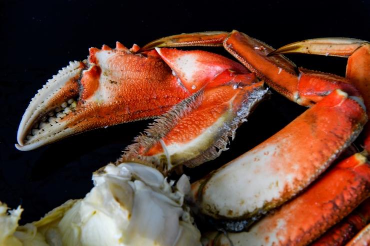 Dungeness Crab 2.jpg