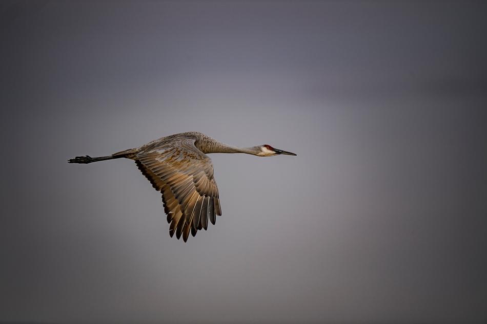 flying-crane-3