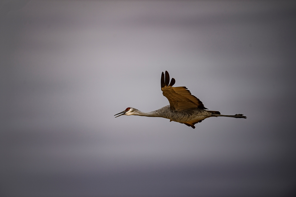 flying-crane