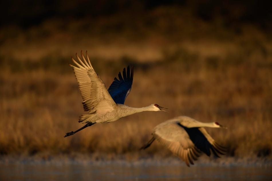Flying pair 2.jpg