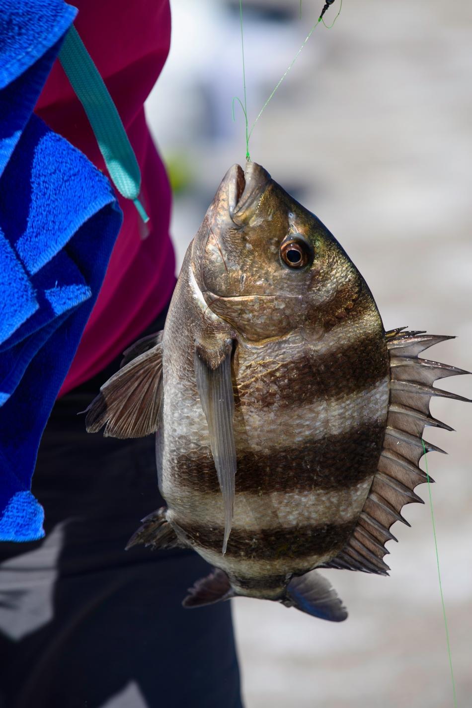 susan-fish-2