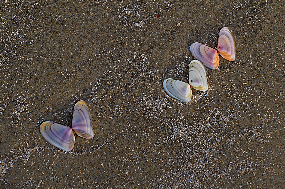 Butterflies in the sand.jpg