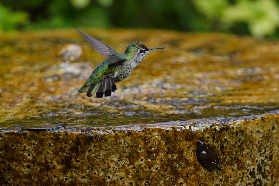 hummer flying.jpg
