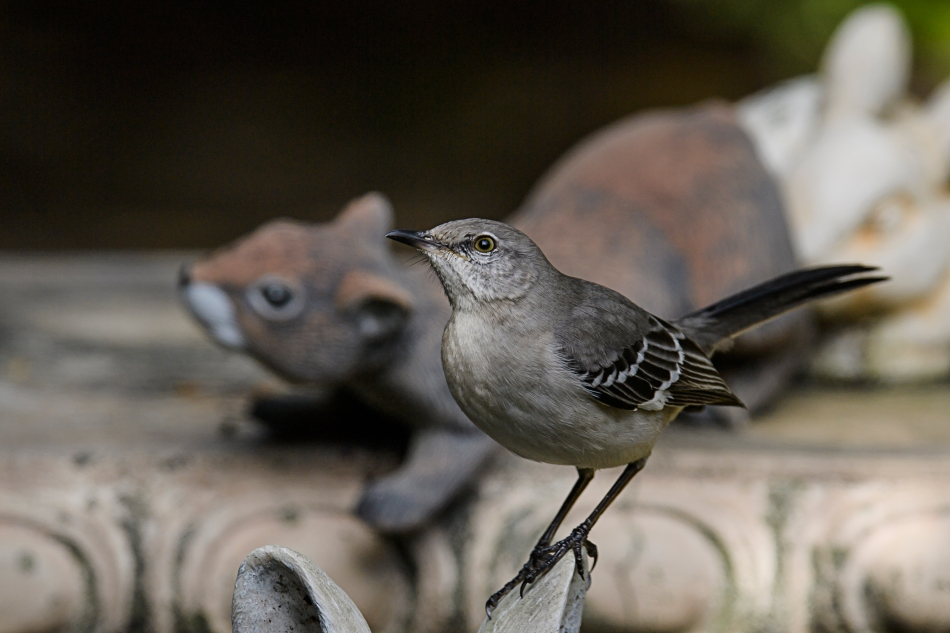mockingbird and squirrel.jpg