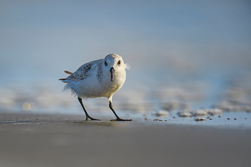 sunsandsurfsanderling.jpg