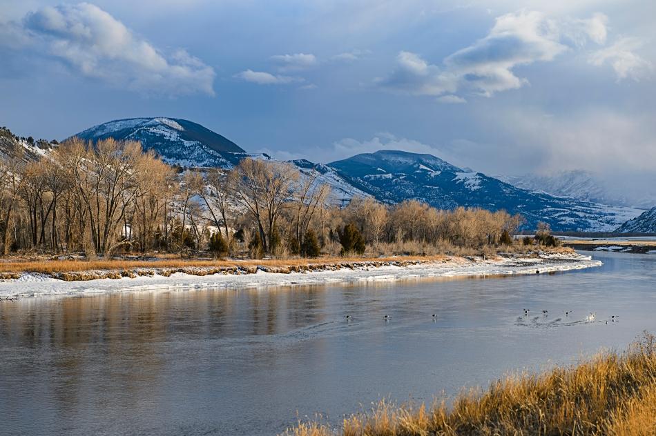 buffleheads on yellowstone river.jpg