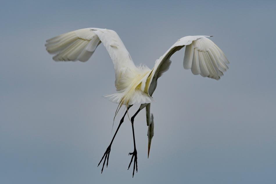 egret nosedive 2