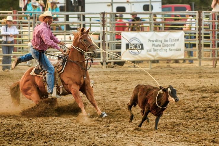 Calf roping 1.jpg