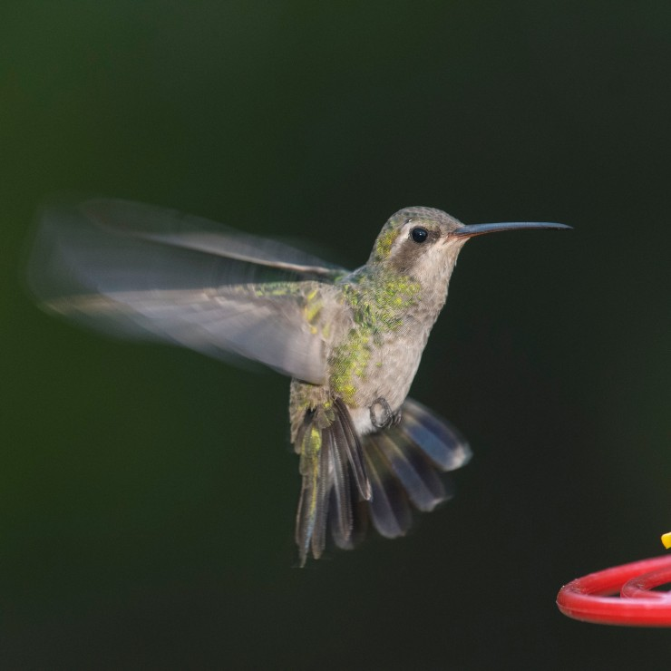 female to feeder 2