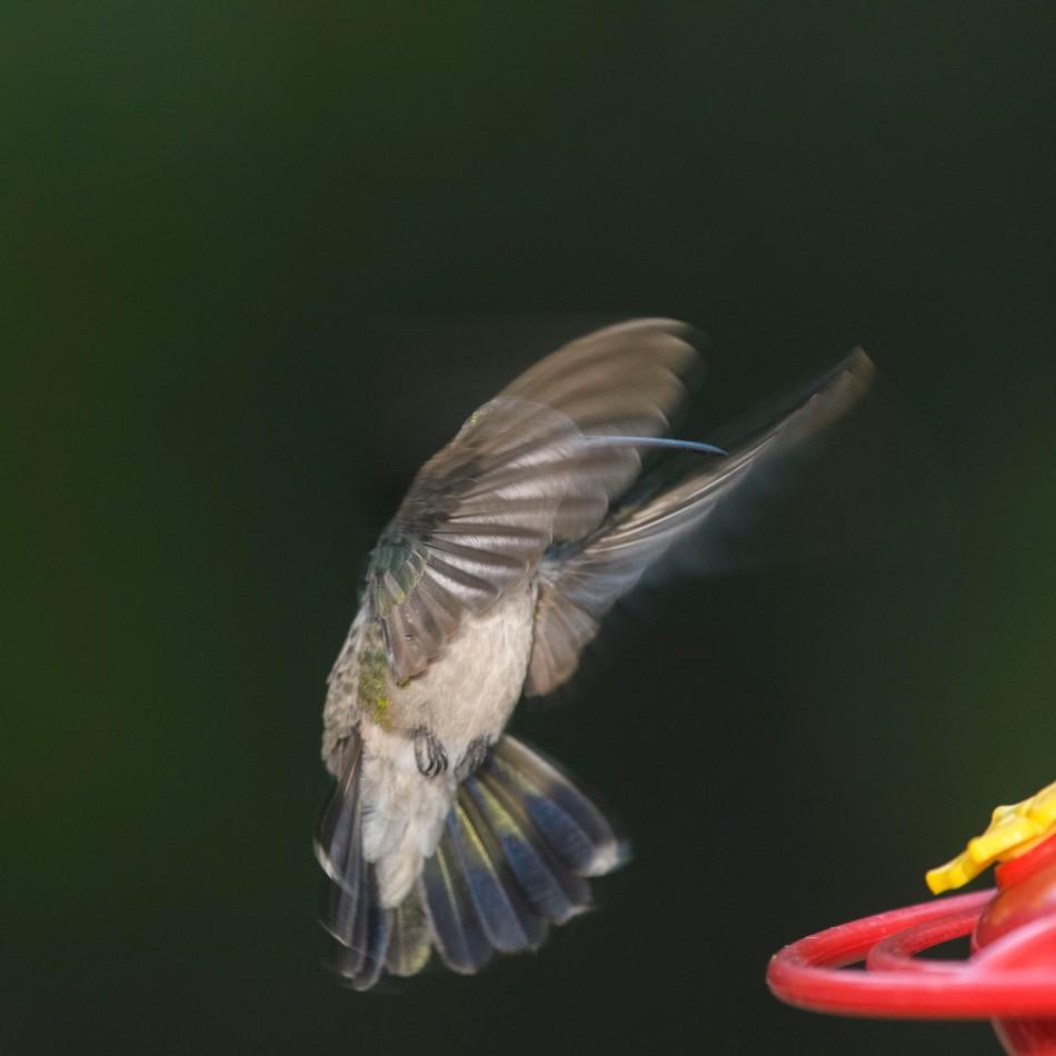 female to feeder 3